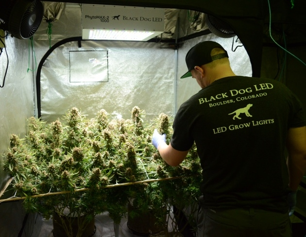 Gallery Of 4 X 4 Grow Tent Picture