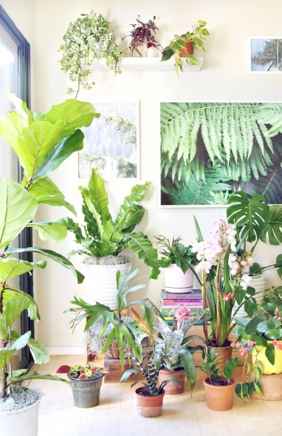 Gallery Of Fast Growing House Plants Photo