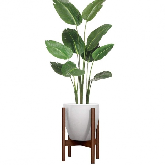 Gallery Of Indoor Plants And Pots Photo