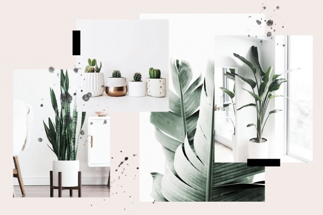 Gallery Of Modern Indoor House Plants Photo