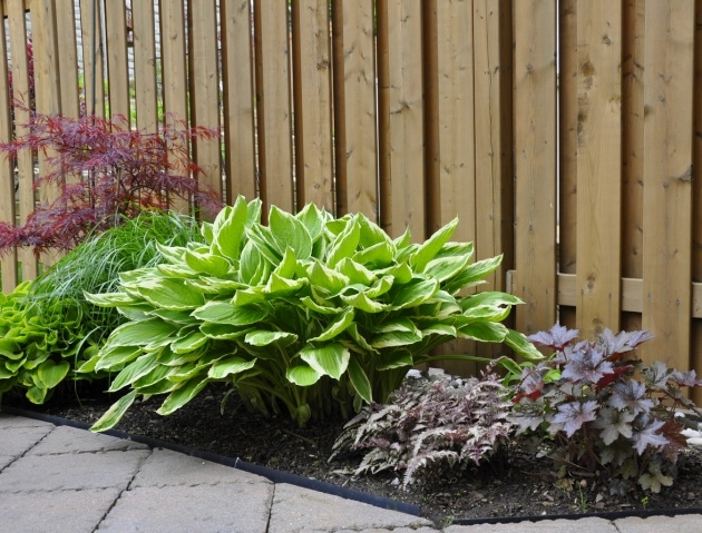 Gallery Of Plants For Small Gardens Picture