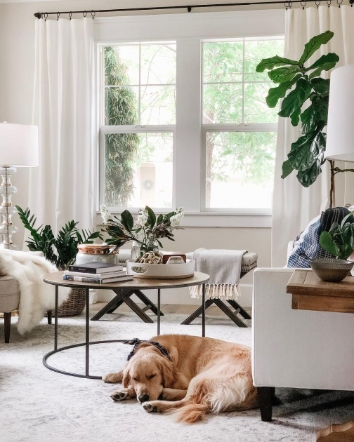 Gallery Of Plants In Home Decor Photo