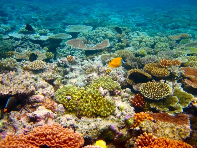Gallery Of The Great Barrier Reefs Plants Image