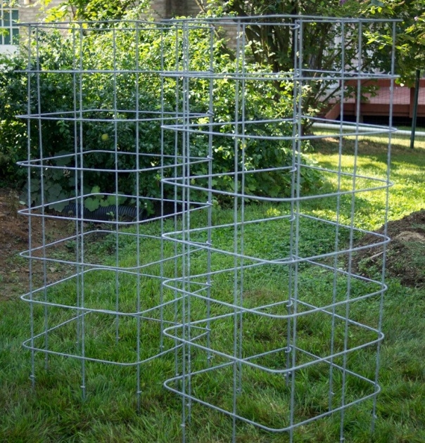 Gallery Of Tomato Cages Photo