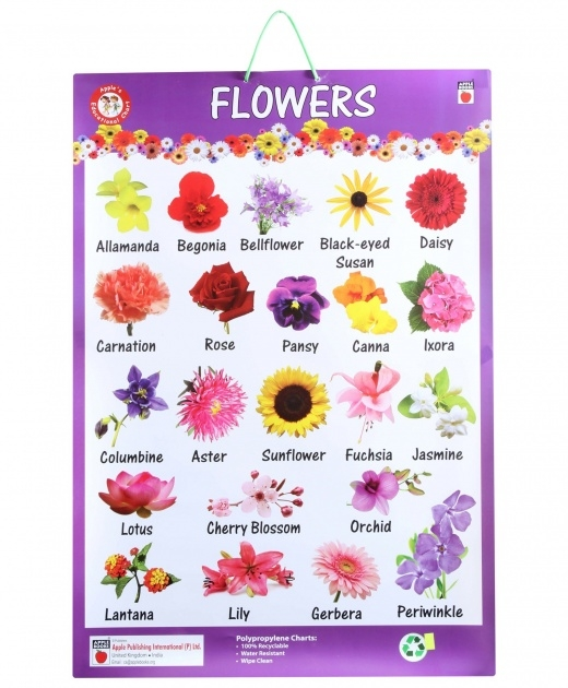 Gallery Of Types Of Flowers In Hindi Image