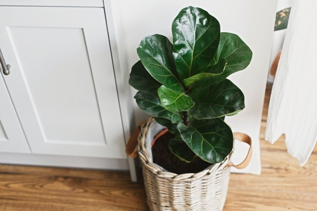 Good 25 Indoor Plants And Caring Tips Picture