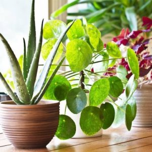 Fast Growing House Plants