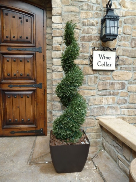 Good Outdoor Topiary Plants Image