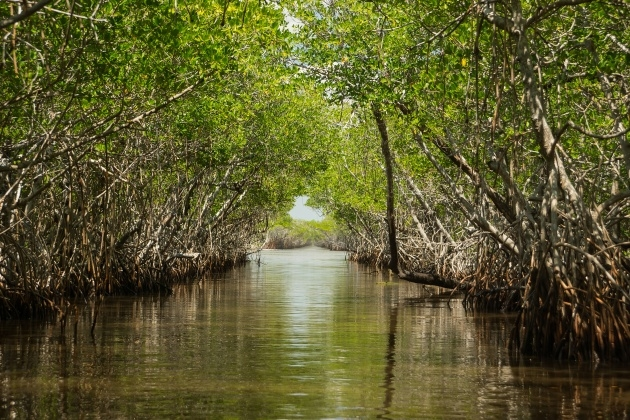 Good Plants In The Everglades Facts Image