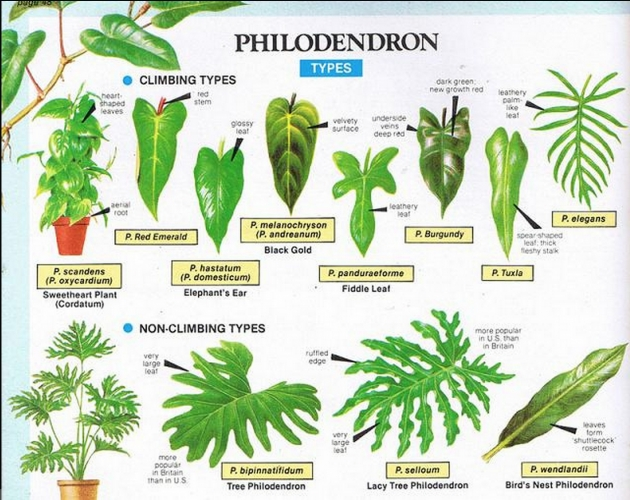 Good Tropical Types Of Plants Picture