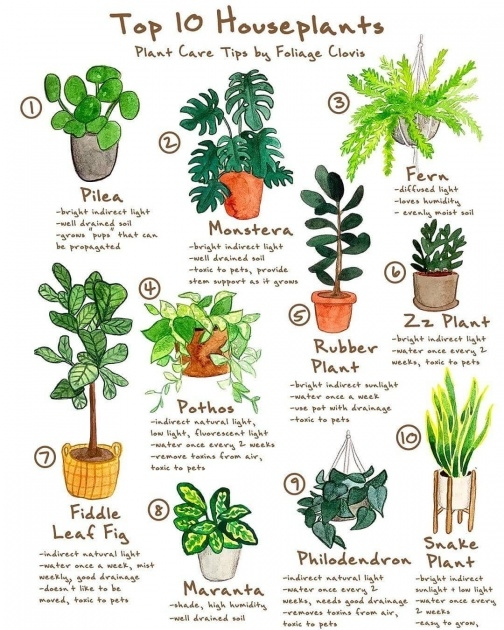 Gorgeous 25 Indoor Plants And Caring Tips Picture