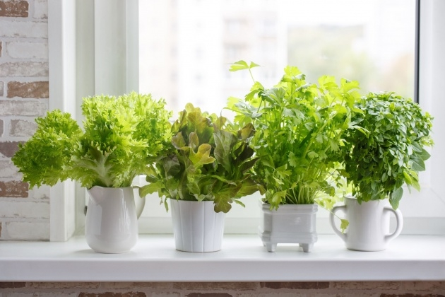 Gorgeous Herb Planter Picture