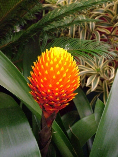 Gorgeous Plants Of Tropical Rainforests Image