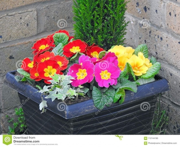 Gorgeous Potted Flowering Plants Image