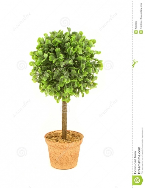 Gorgeous Small Tree Plant Picture