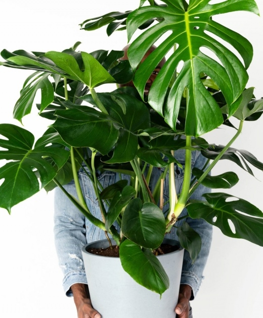 Great Green House Plants Pictures Picture
