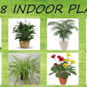 Air Purifying Indoor Plants