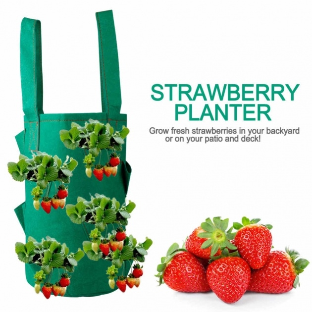 Great Ideas Hanging Strawberry Planter Image
