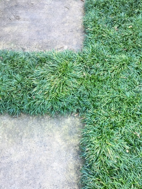 Great Ideas Low Profile Ground Cover For Between Pavers Picture