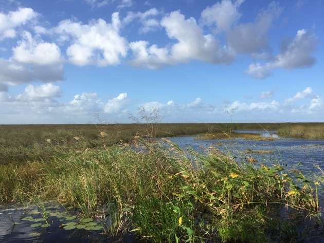 Great Ideas Plants In The Everglades Facts Picture