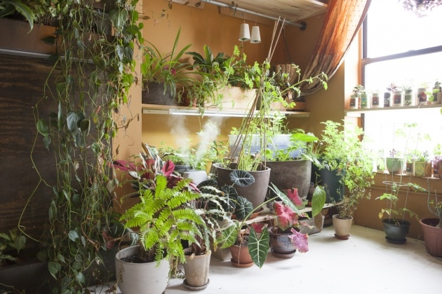 Great Ideas Summer Rayne Oakes Houseplants Picture