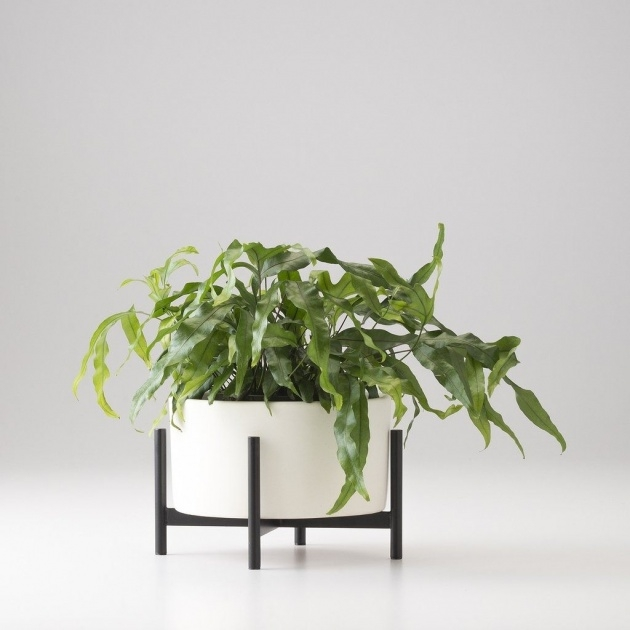 Great Ideas Tabletop Planter Photo