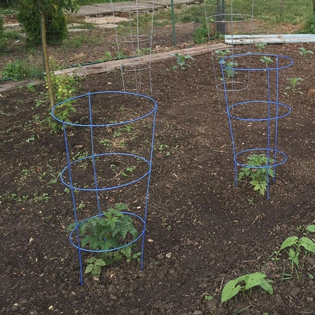 Great Ideas Tomato Cages Picture
