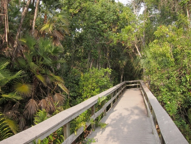 Great Plants In The Everglades Facts Image