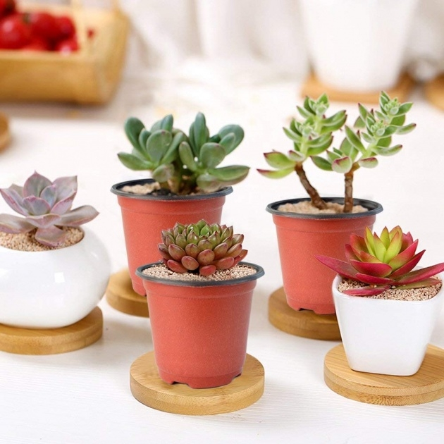 Great Small Plant Pots Picture