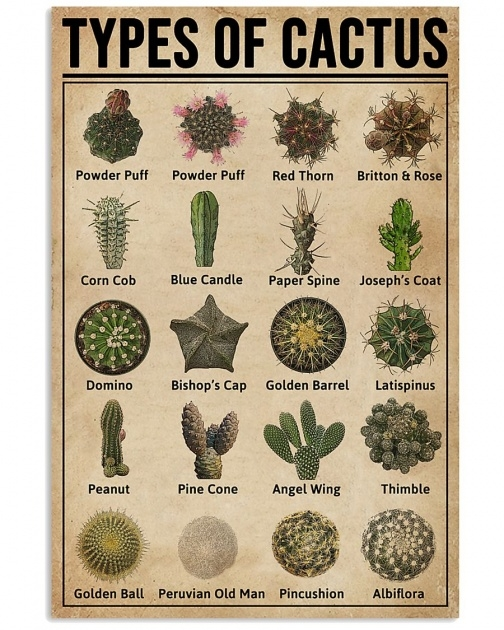 Great Types Of Cactus Picture