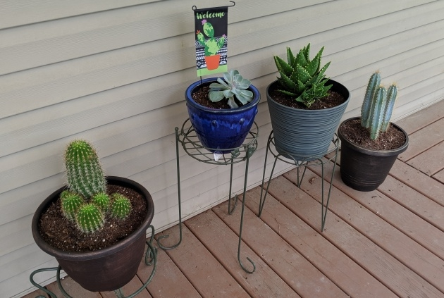 Ideas for Cactus That Dont Need Soil Image