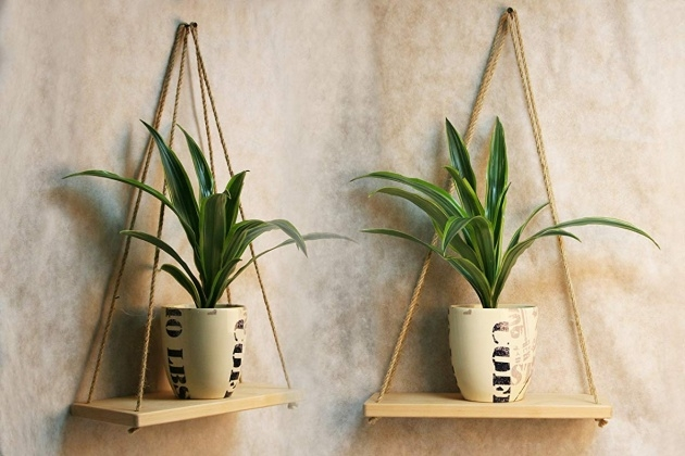 Ideas for Orchid Wall Planter Picture