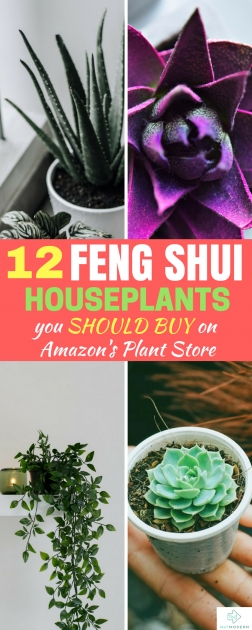 Ideas for Plants In Bedroom Feng Shui Picture