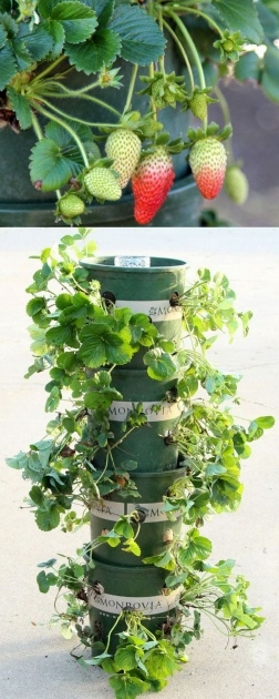 Ideas for Self Watering Strawberry Planter Photo