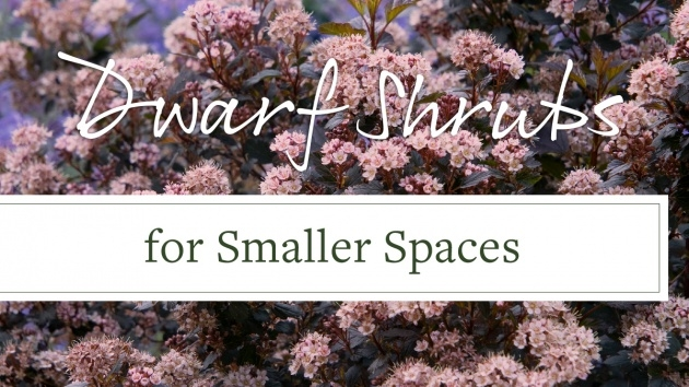 Ideas for Small Outdoor Shrubs That Dont Need Light Photo