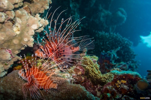 Ideas for The Great Barrier Reefs Plants Image