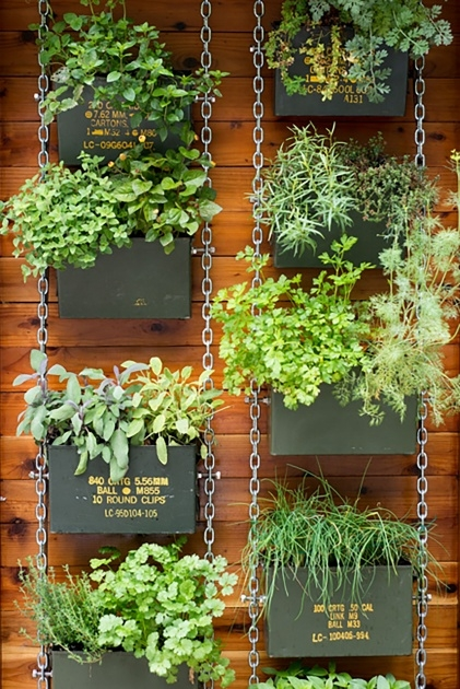 Ideas for Wall Garden Plants Picture