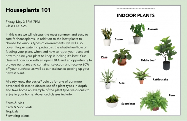 Imaginative Type Of House Plants Picture