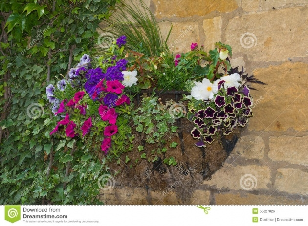 Imaginative Wall Baskets For Plants Photo
