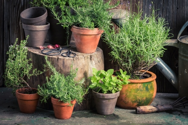 Innovative Planting Herbs In Pots Photo