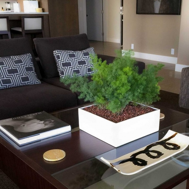 Innovative Tabletop Planter Picture