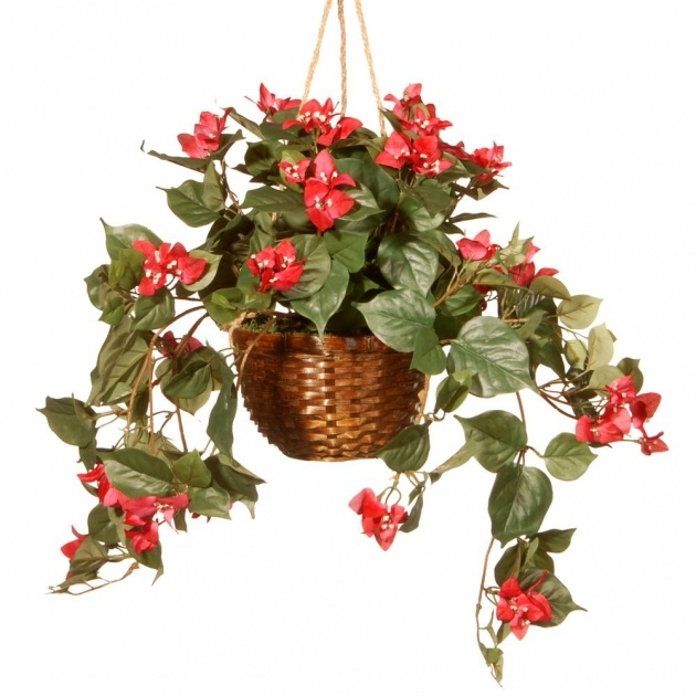 Insanely Hanging Flower Plants Photo