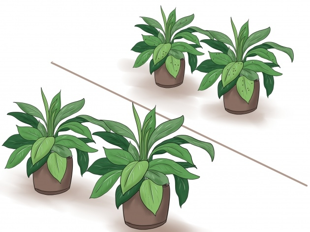 Insanely Houseplants Scale On Spider Plants Photo