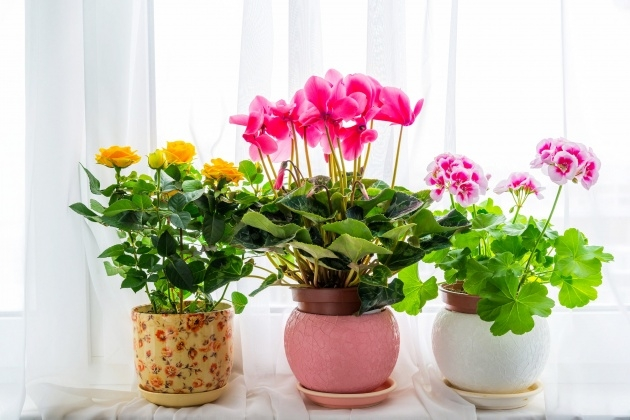 Insanely Indoor Flowering Plants Picture