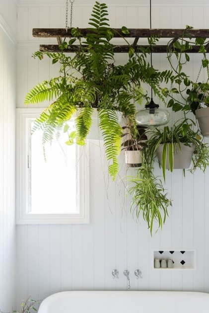 Insanely Indoor Plant Ideas Picture