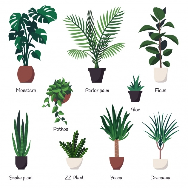 Insanely Names Of House Plants With Pictures Picture