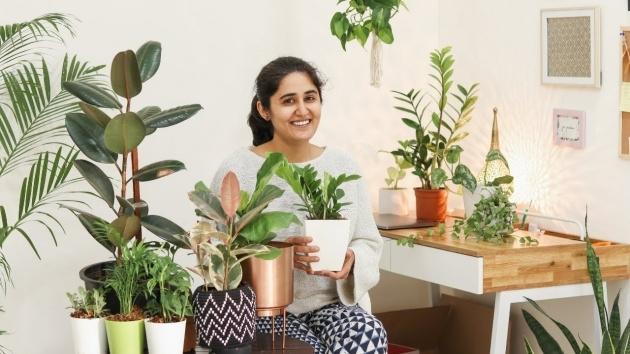 Inspiration Air Purifier Plant Indoor Image