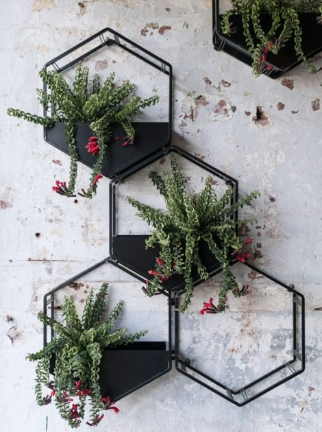 Inspiration Decorative Wall Planters Picture