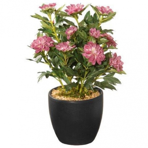 Inspiration Potted Flowering Plants Photo