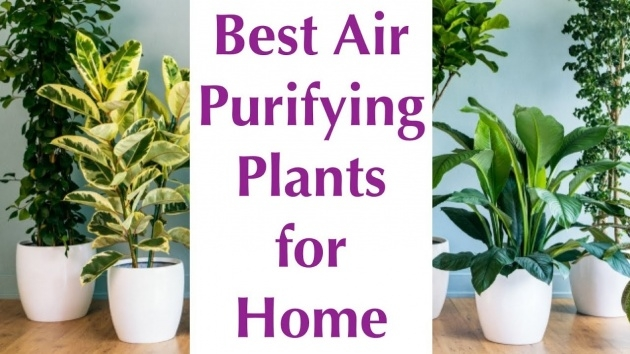 Inspirational Air Purifying Indoor Plants Picture